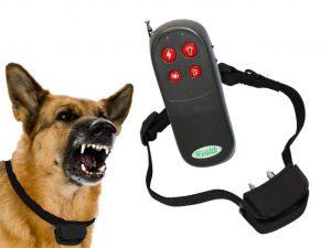 Collier électrique chien : quel type de collier acheter ?